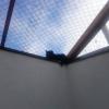 Mowgli ja puuri katus