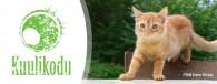 <b>Kuulikodu: Hiiumaa loomad vajavad abi</b>
