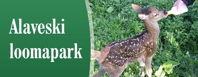 """Alaveski loomapark tutvustab rahvale võimalikult looduslähedastes tingimustes meie metsade loomi-linde. Nad on püüdnud kaasa aidata ka ulukite rehabilitatsioonile. <a href=""""http://www.help.ee/alaveski-loomapark/"""">Continue reading <span class=""""meta-nav"""">→</span></a>"""