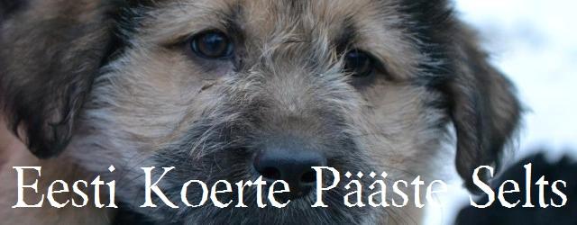 """Eesti Koerte Pääste Selts on loodud eesmärgiga aidata neid koeri, kes on tulnud tänavalt, väärkoheldud, hüljatud, vigastatud või ära võetud omanikelt. <a href=""""http://www.help.ee/eesti-koerte-paaste-selts/"""">Continue reading <span class=""""meta-nav"""">→</span></a>"""