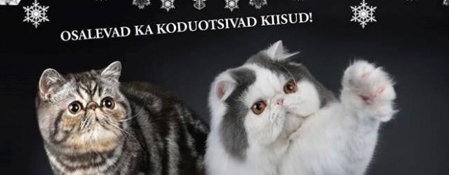 """Korraldame kuuendat aastat rahvusvahelist kassinäitust. <a href=""""http://www.help.ee/kassinaitus-mtu-cleopella-cat-fanciers-of-estonia/"""">Continue reading <span class=""""meta-nav"""">→</span></a>"""